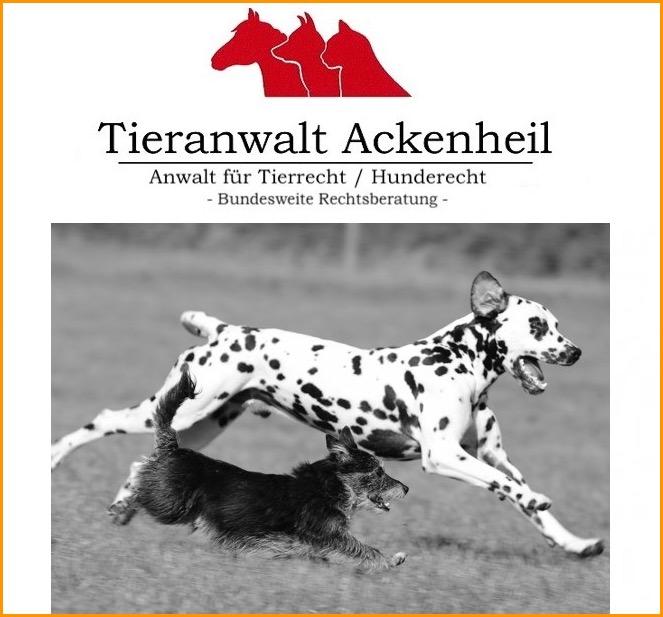 Vermieter Hunderecht Anwalt Anwalt Fur Hunde Bundesweit