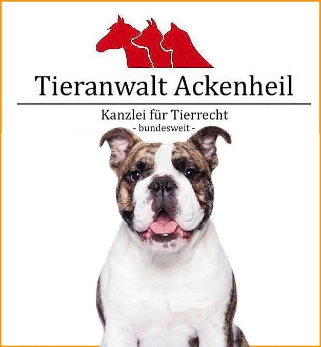 Old English Bulldog Old English Bulldog Kein Listenhund Kreuzung Hunderecht Anwalt Anwalt Fur Hunde Bundesweit